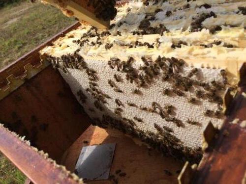 Honing productie - imkerij Cox
